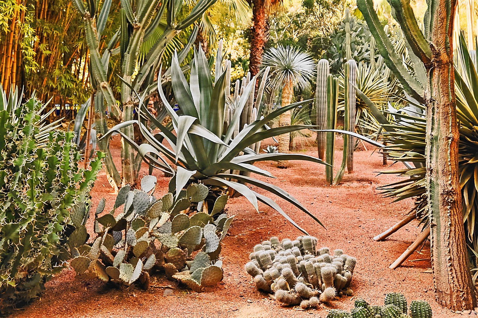 Cactus ovunque